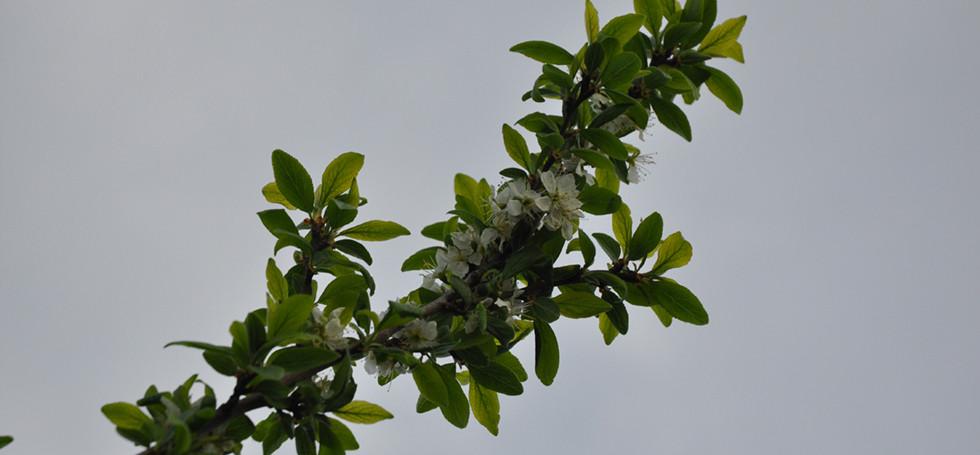 Hochstammbäume (25) Kopie.jpg
