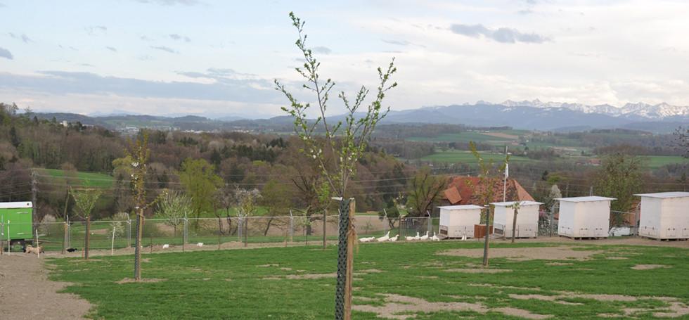 Hochstammbäume (24) Kopie.jpg