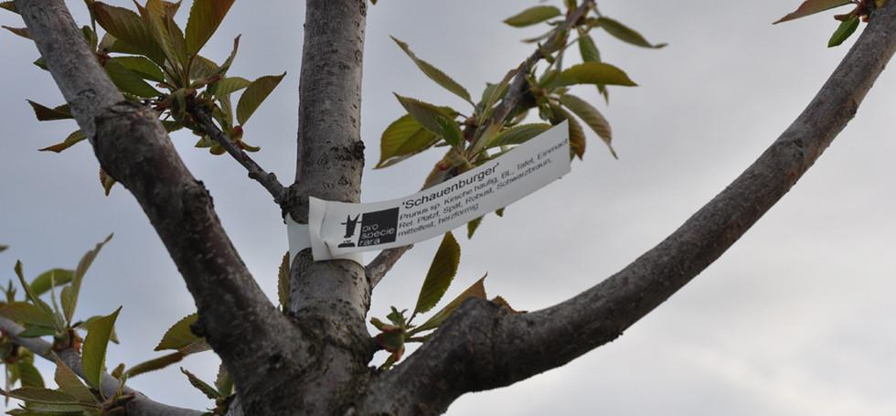 Hochstammbäume (19) Kopie.jpg
