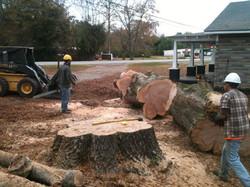 Tree Service Jacksonville, AL