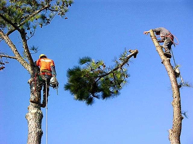 Arbor Rite Tree Service Anniston, AL