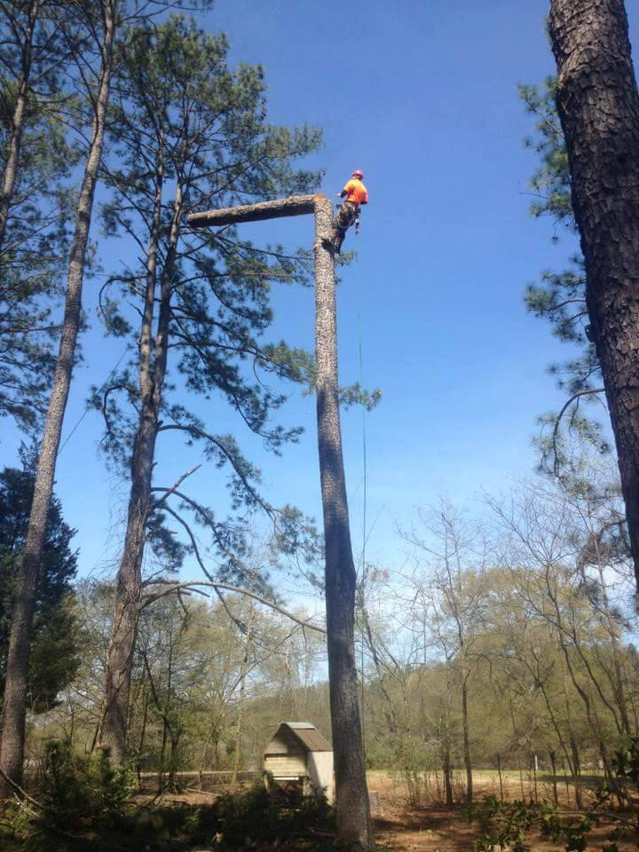 Arbor Rite Tree Service Oxford, AL