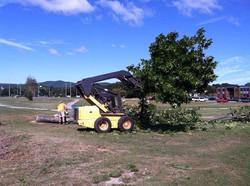 Tree Service Anniston, AL