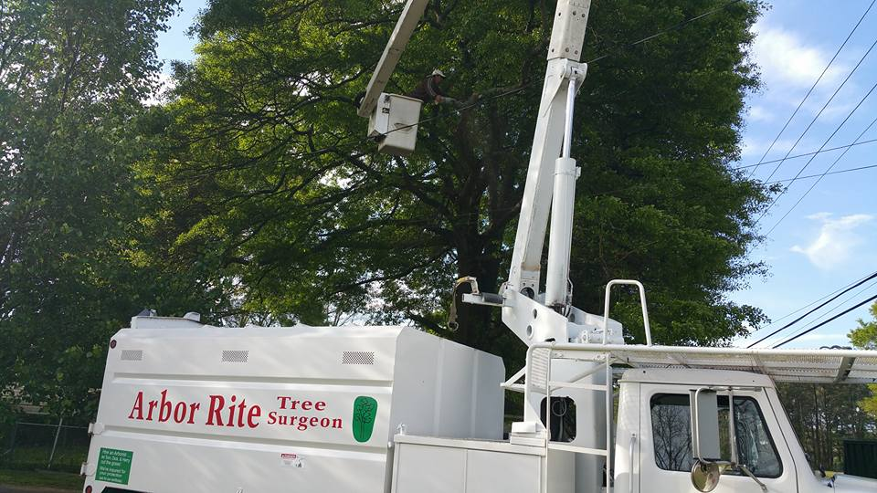 Tree Service Oxford, AL