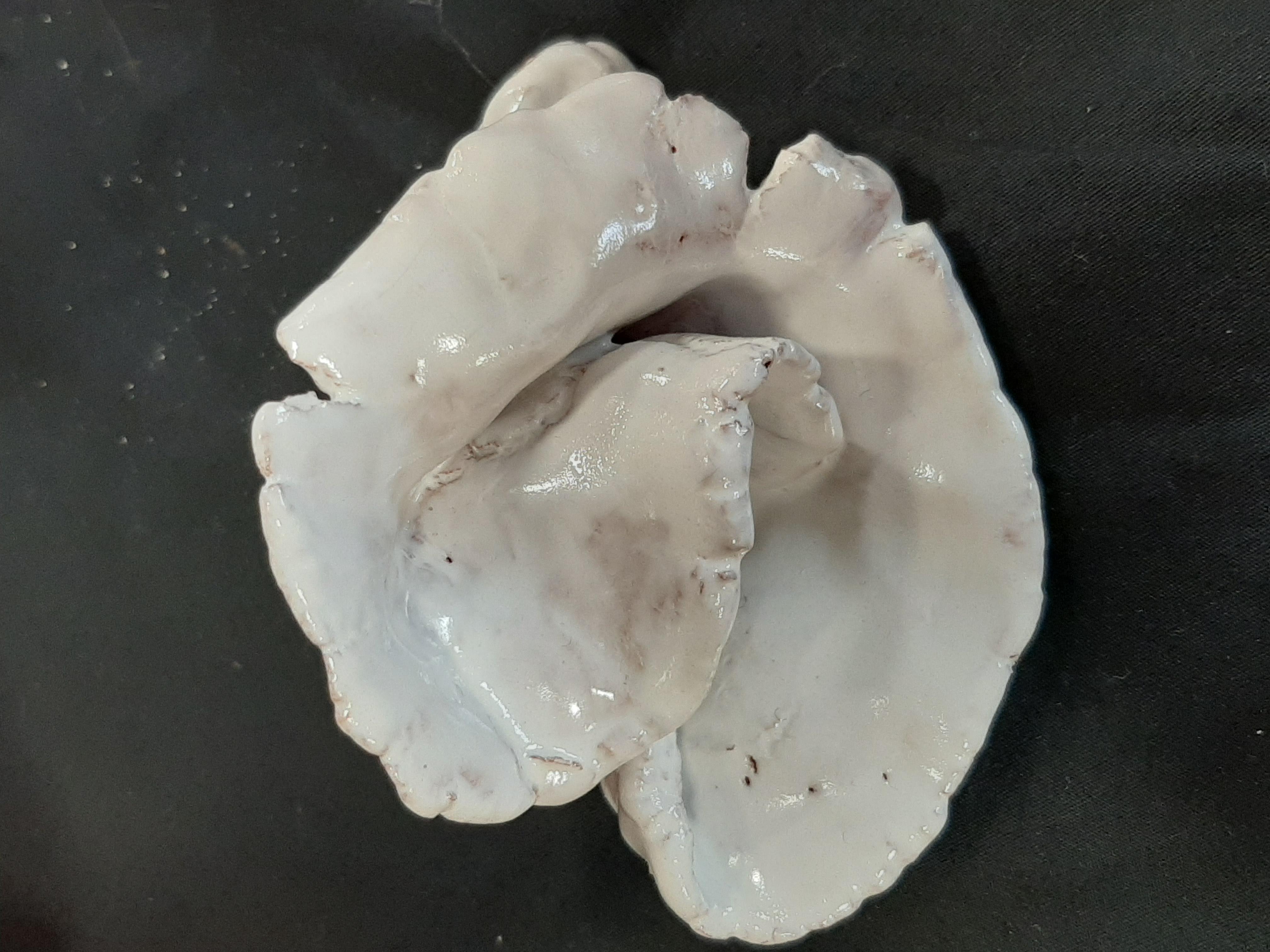 Clay organics