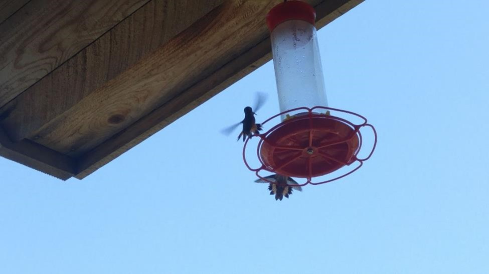 Bonnie Luterbach Humming Birds at Feeder