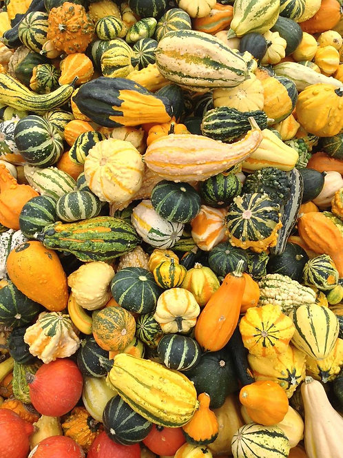 Ornamental Small Gourd Mix - 10 Gourd Seeds