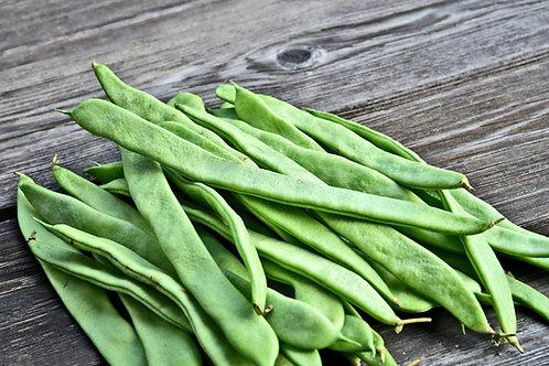 Christmas Pole Lima Bean 10 Premium Seeds Butter Bean