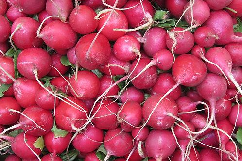 Pink Celebration Radish Heirloom Premium Seeds