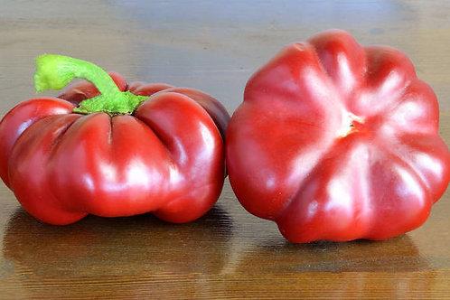 Rosso Sicilan Togetta Italian Tomato - 10 Seeds