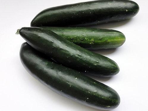 Tendergreen Cucumber- 20 seeds Garden Heirloom Seed