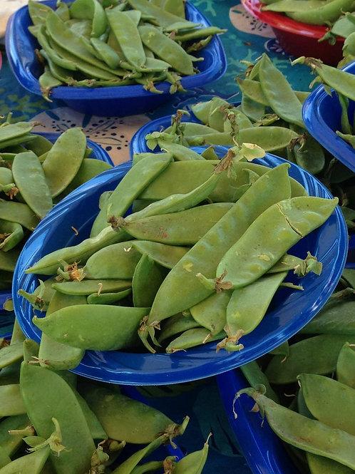 Oregon Giant Snow Pea 50 Seeds! Garden Vegetable Seeds! NON GMO