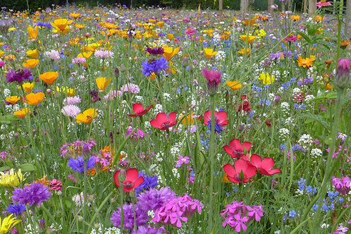 Serendipity's Heirloom Flower Garden Seed Mix 250 seeds Lots of Color!