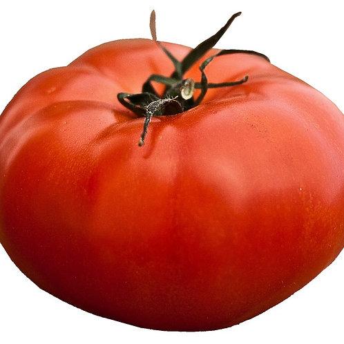 10 Seeds Italian Heirloom Tomato- BIG Fruit! = OP Non GMO