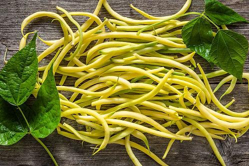 Top notch Golden Bush Bean Seed