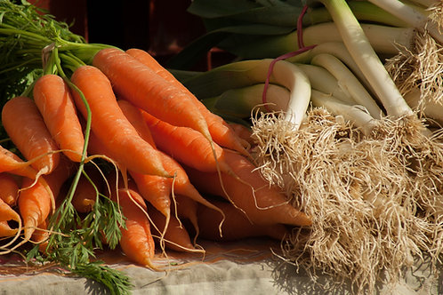 Danvers Half Long Carrot Seeds 100 Garden Seed Pack