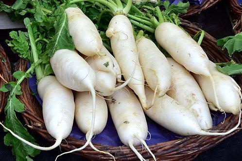 Lunar White Carrot-  Seeds