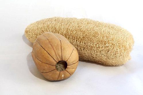 Luffa Cylindrica Seeds Natural Non GMO