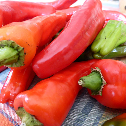 SEEDS = Red Marconi Sweet Pepper  all natural Non GMO Good For Grilling