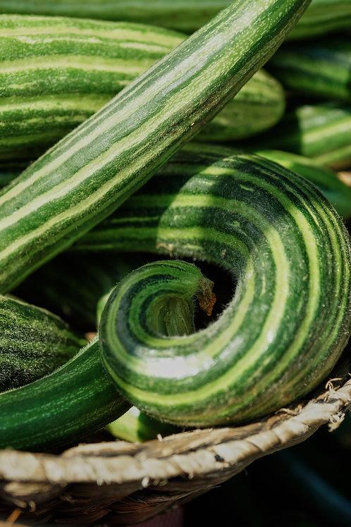 Armenian Cucumber seeds Yard Long Fruits!