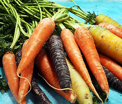 rainbow carrot pond 5 lisence 8-2018.jpg