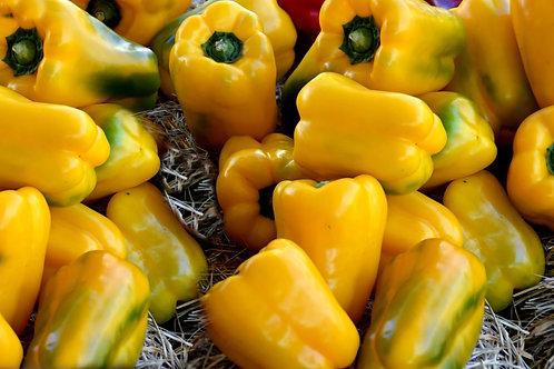 California Golden Bell Pepper Seeds