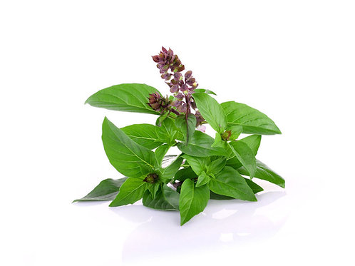 Siam Queen Basil 200 Seeds