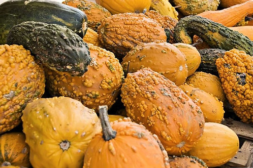 10 Gourd Seeds - Lunch Lady - Ornamental Large Warted Gourd