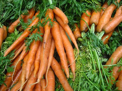Scarlet Nantes Carrot, NON Gmo Seeds