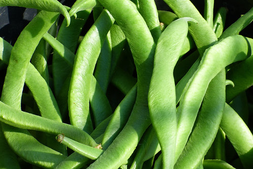 White Half Runner Green Bean Seeds Great for Small Garden Spaces