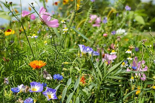 Serendipity's Pacific Northwest Wildflower Mix Starter Pack