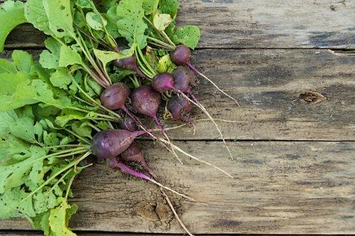 100 SEEDS Purple Plum Radish- Non Gmo- Mild and sweet Flavor- Heirloom