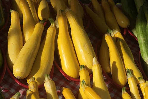 Early Prolific Straighneck Summer Squash- 10 seeds- Market Or Home -Heirloom