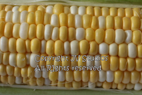 Honey & Cream Bi Color Super Sweet Corn 20 Premium Seeds
