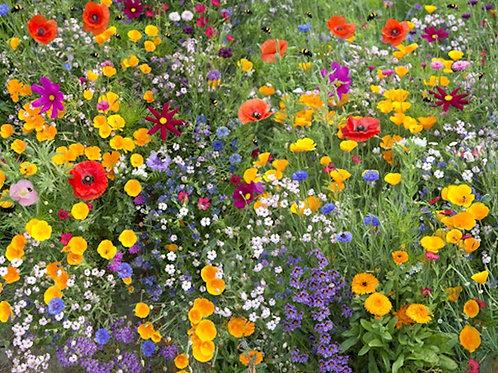 Serendipity's Bee Friendly Garden Wildflower Mix - Approx. 500 seeds