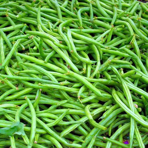 Kentucky Dreamer Bush Bean 50 Seeds High Yields Tasty Fresh or Frozen