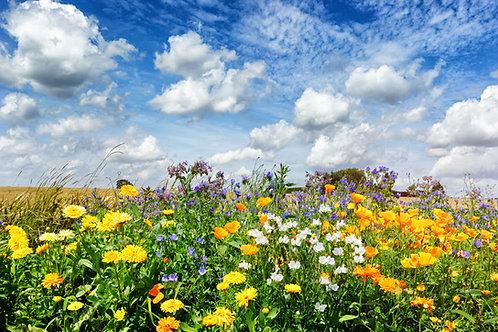 Serendipity's Perennial Flower Garden Seed Mix App 250 Seeds