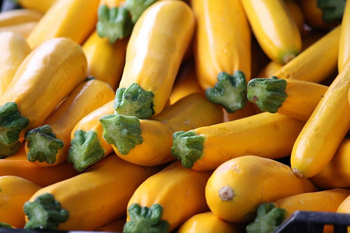 Golden Zucchini Squash 20 Seeds -Heirloom Vegetable -Great Taste- High Quality