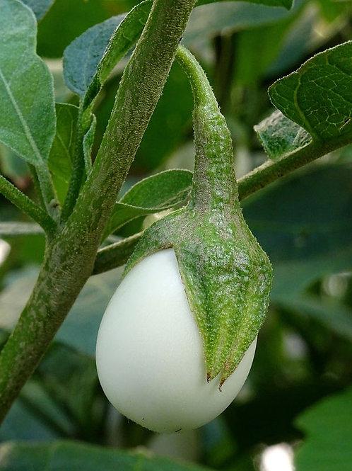 Ornamental Eggplant Golden Eggs Unique Golden Egg Tree Container Plant Seeds