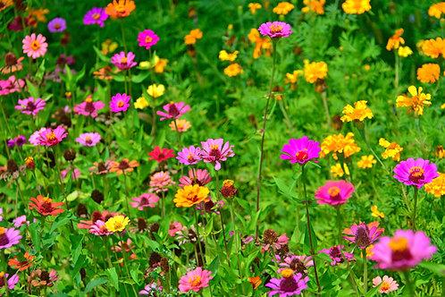 Serendipity's Butterfly Garden Wildflower Mix