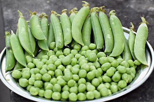 50 Seeds --Sugar Ann Snap Heirloom Pea