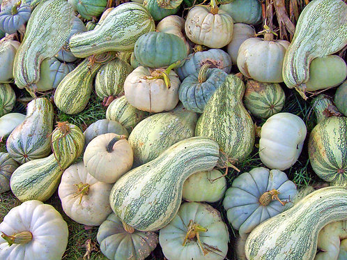 Cushaw Squash- Seeds- Vegetable --NON GMO Heirloom Supply is Limited