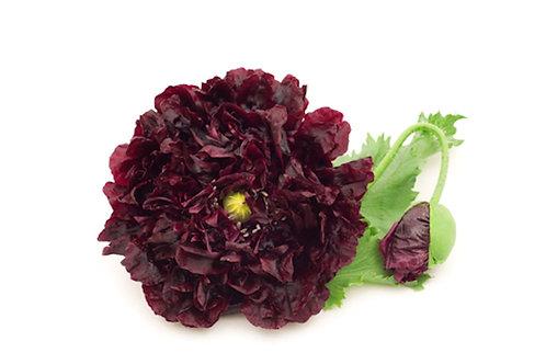 Double Black Flower Poppy - Premium Seeds Papaver