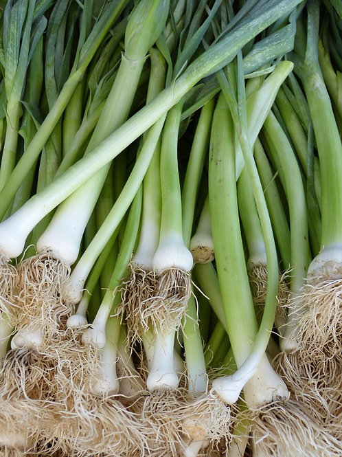 50 Seeds- White Nebuka Bunching Onion - Classic Heirloom