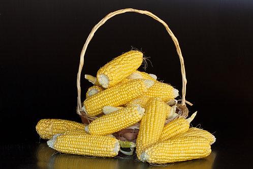 Truckers Favorite Yellow Corn 20 Seeds Garden Pack 20 Seeds