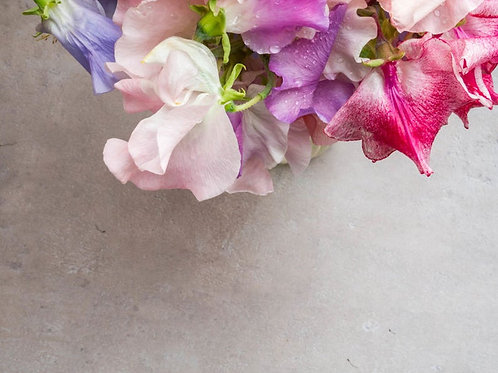 10 Seeds Sweet Pea Everlasting Mix Seed Pack - Rainbow Flowers