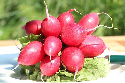 Pink Lady Slipper Radish Heirloom Premium Seeds