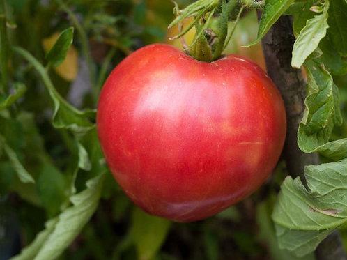 Anna Russian Tomato- Oxheart type- 10 Seeds -Heirloom