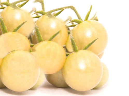 10 Seeds White Cherry Tomato -Good for Sauce and Fresh- Freezing