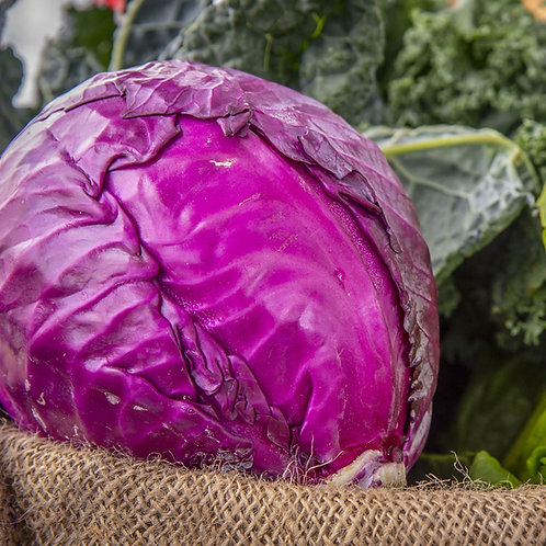 Red Acre Cabbage Vegetable Seeds